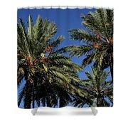 Palms 9838b Shower Curtain