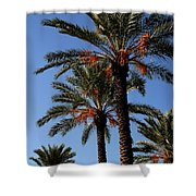 Palms9895b Shower Curtain