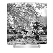 Palo Verde Blossoms Shower Curtain