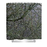 Palo Verde In The Rain Shower Curtain