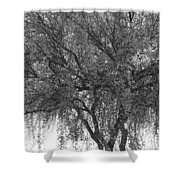 Palo Verde Tree 2 Shower Curtain