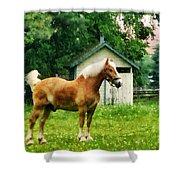 Palomino In Pasture Shower Curtain