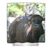 Pam The Bull Shower Curtain