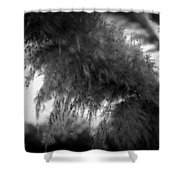 Pampas Dew Shower Curtain