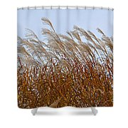 Pampas Grass In The Wind 1 Shower Curtain