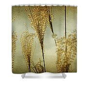 Pampas Grass Panoramic Shower Curtain