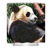 Panda In Tree Shower Curtain
