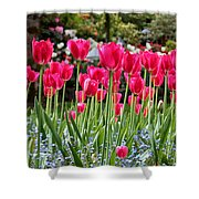 Panel Of Pink Tulips Shower Curtain