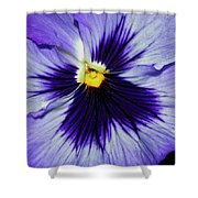 Pansy Closeup Shower Curtain