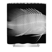 Panther Grouper X-ray Shower Curtain