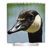 Papa Goose Eye Shower Curtain