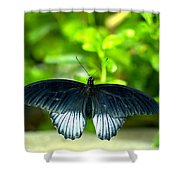 Papilio Lowii II Shower Curtain