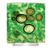 Paracoccidioides Brasiliensis Shower Curtain