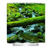 Paradise Of Mossy Logs And Slow Water   Shower Curtain