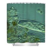 Paramecium Feeding Lm Shower Curtain