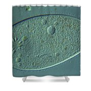 Paramecium Lm Shower Curtain