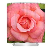 Paris Rose Shower Curtain