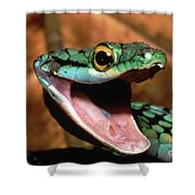 Parrot Snake Leptophis Ahaetulla Shower Curtain