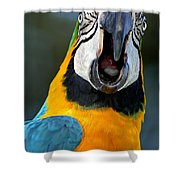 Parrot Squawking Shower Curtain