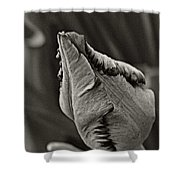 Parrot Tulip In Black And White Shower Curtain