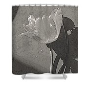 Parrot Variety  Shower Curtain