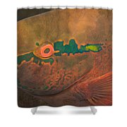 Parrotfish Scaridae Shower Curtain