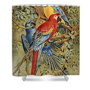 Parrots: Macaws, 19th Cent Shower Curtain