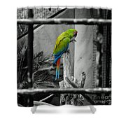 Parrott Thro The Cage Shower Curtain