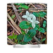Partridge Berry Flower - Mitchella Repens Shower Curtain