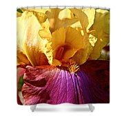 Party Colors Shower Curtain