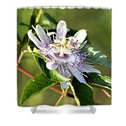 Passion Flower - May Pop Bloom Shower Curtain