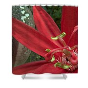 Passion Flower Blossom Costa Rica Shower Curtain