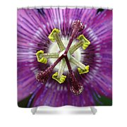 Passion Flower Close Up Shower Curtain