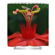 Passion Flower Crown Shower Curtain