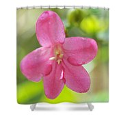 Passion For Flowers. Sweetie Shower Curtain