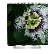 Passion Fruit Flower Shower Curtain