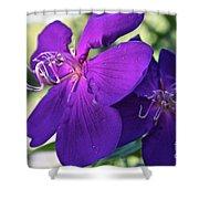 Passion Purple Shower Curtain
