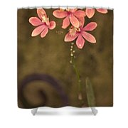 Passionate Pink Shower Curtain
