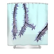 Pastel Glow On The Frost Shower Curtain