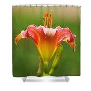 Pastel Lilyform Shower Curtain