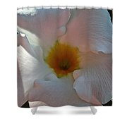 Pastel Mandevilla Shower Curtain