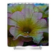 Pastel Petunias Shower Curtain