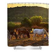Pasturing Horses Shower Curtain