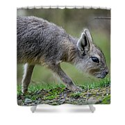 Patagonian Cavy Youngin Shower Curtain