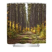 Path Into The Forest In Autumn Sault Shower Curtain