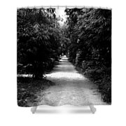 Path  Shower Curtain