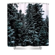 Pat's Winter Trees 1d Shower Curtain