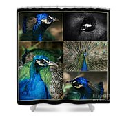 Pavo Cristatus IIi The Heart Of Solitude  - Indian Blue Peacock  Shower Curtain