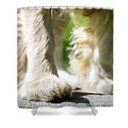 Paw Shower Curtain