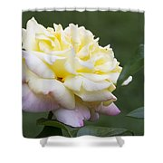 Peace Rose Shower Curtain